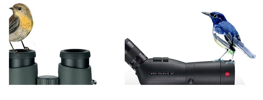 prismáticos o telescopio